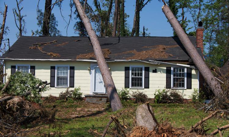 roof storm damage trees fallen